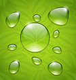 Water drops on fresh green leaves texture vector