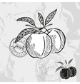 Hand drawn decorative peach fruits vector