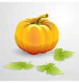 Orange pumpkin and green leaves vector