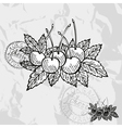 Hand drawn decorative cherry fruits vector