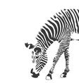 Zebra in black and white silhouette vector