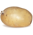 New potato tuber vector