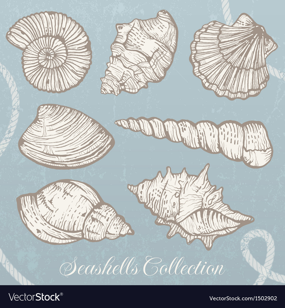 Seashells collection vector | Price: 1 Credit (USD $1)