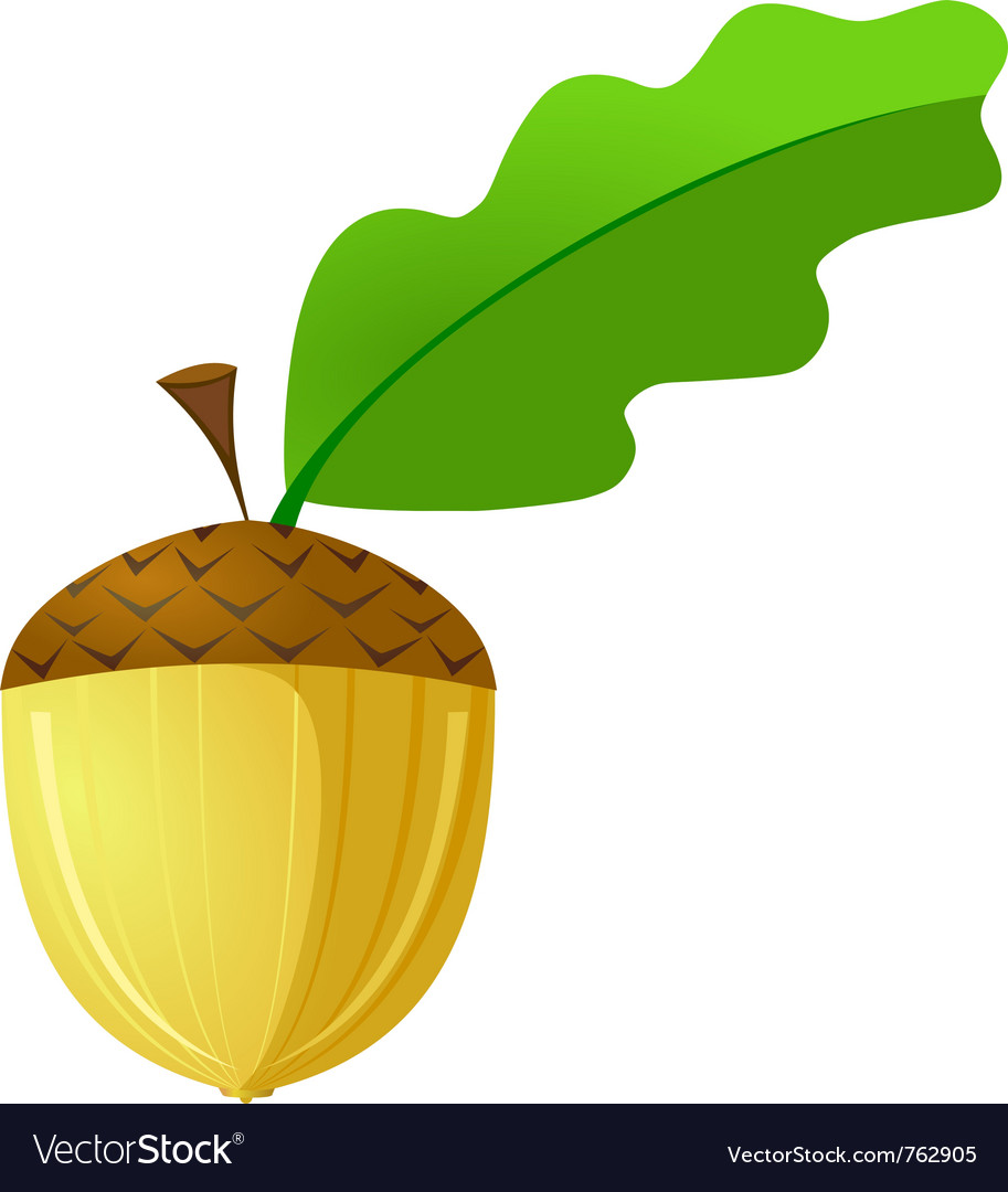 Acorn is not a white background vector | Price: 1 Credit (USD $1)