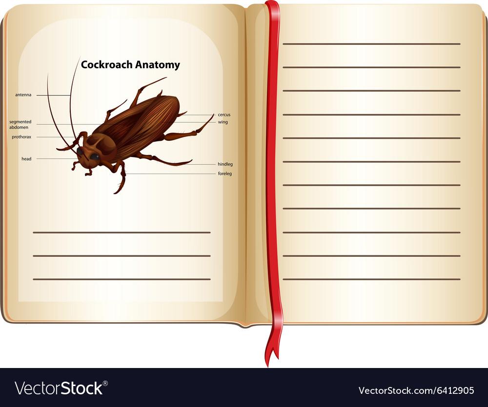 Termite Pest Controls: Cockroach Anatomy