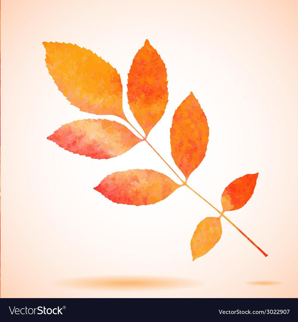 Orange watercolor painted ash tree leaf vector | Price: 1 Credit (USD $1)