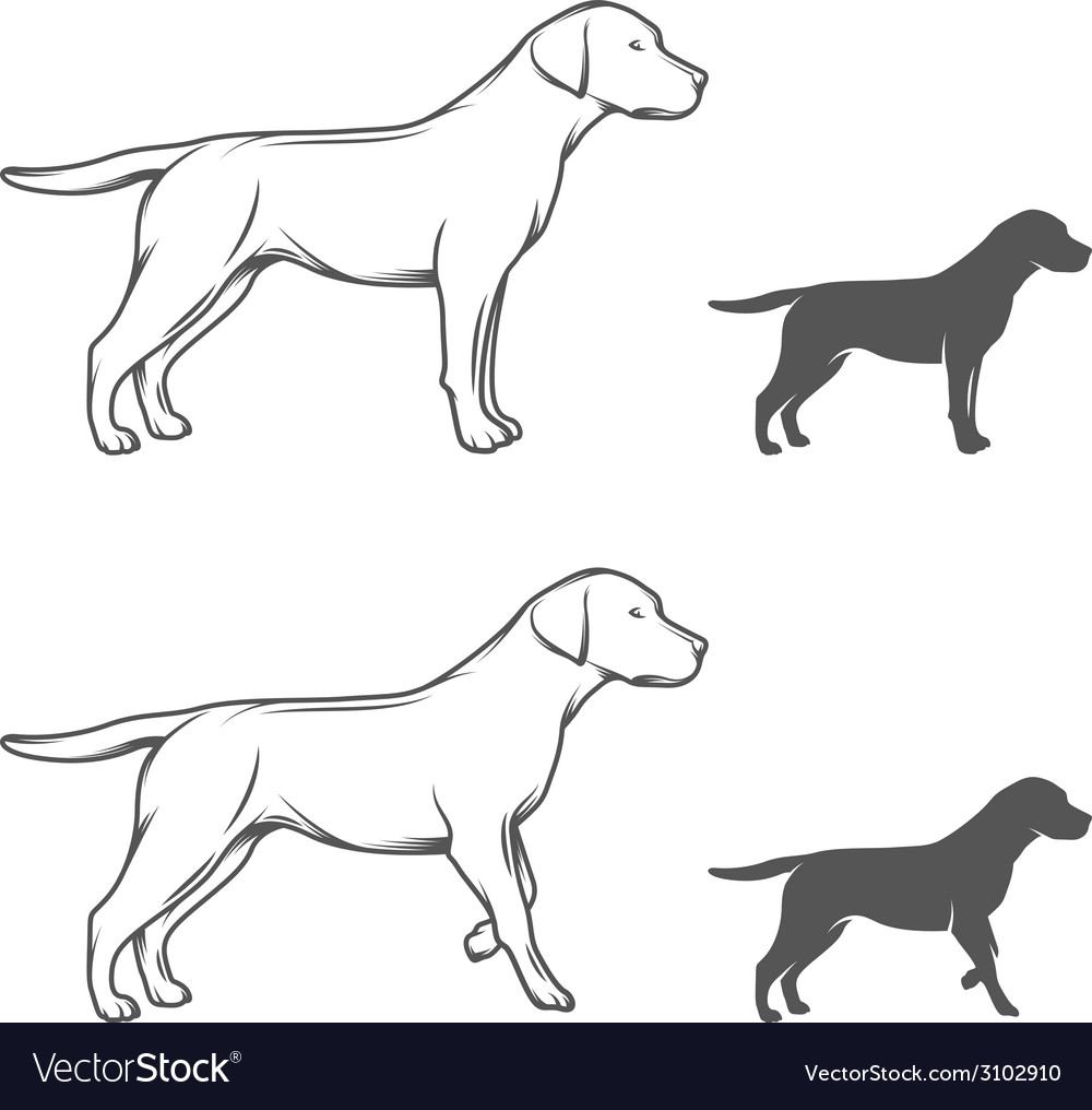 A dog in different poses vector | Price: 1 Credit (USD $1)