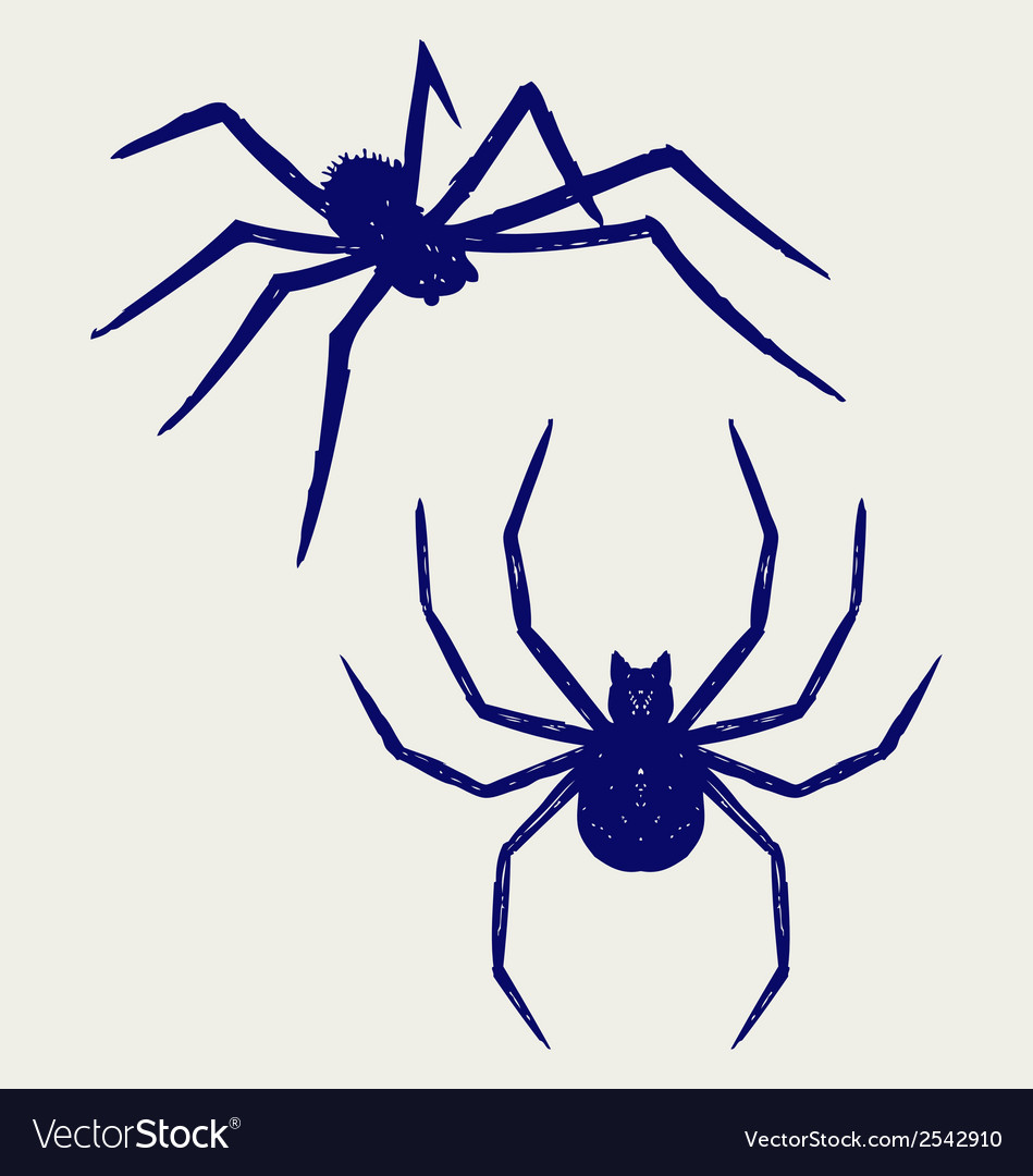 Black spider vector | Price: 1 Credit (USD $1)