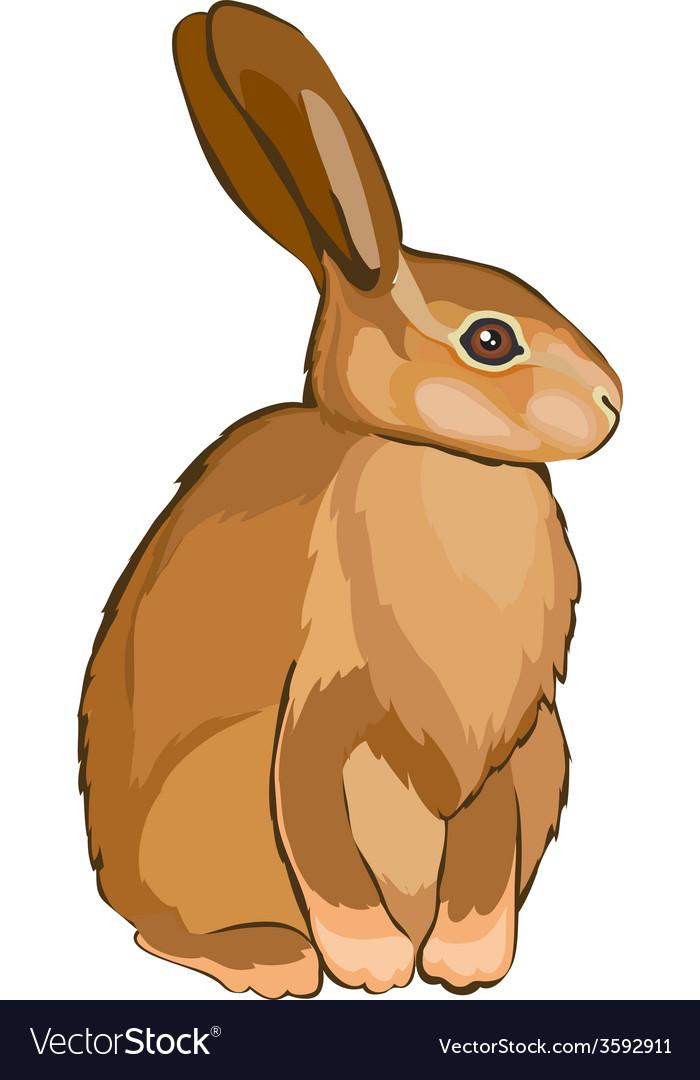 Hare vector | Price: 1 Credit (USD $1)