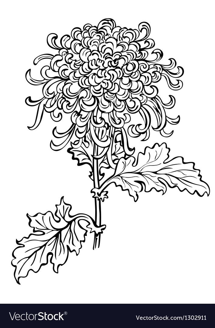 Japanese chrysanthemum flower vector | Price: 1 Credit (USD $1)
