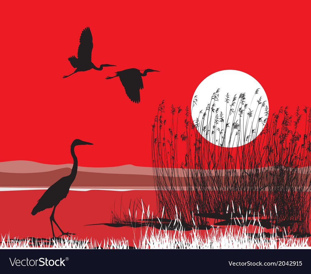 Herons on shore vector | Price: 1 Credit (USD $1)