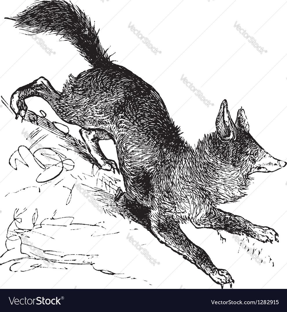Red fox vintage engraving vector | Price: 1 Credit (USD $1)