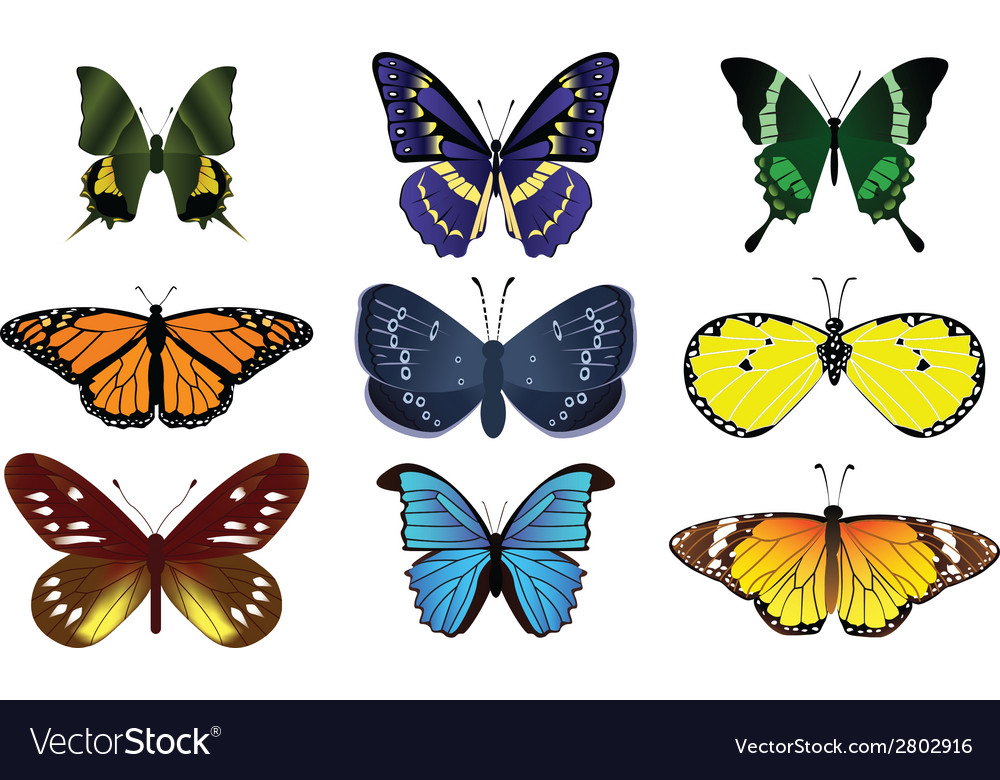 24butterfly vector | Price: 1 Credit (USD $1)
