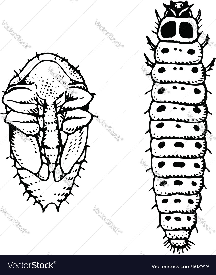 Larva and worm meligethes aeneus vector | Price: 1 Credit (USD $1)