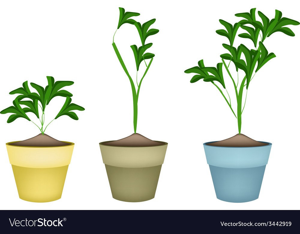 Three ornamental plants in ceramic flower pots vector | Price: 1 Credit (USD $1)