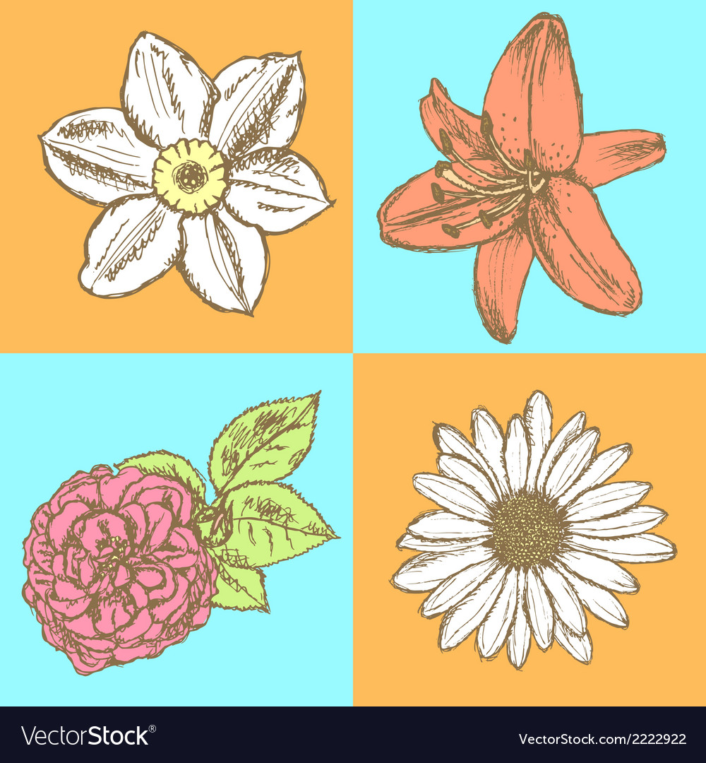 Lily daisy and rose narcissus flower sketch vector | Price: 1 Credit (USD $1)