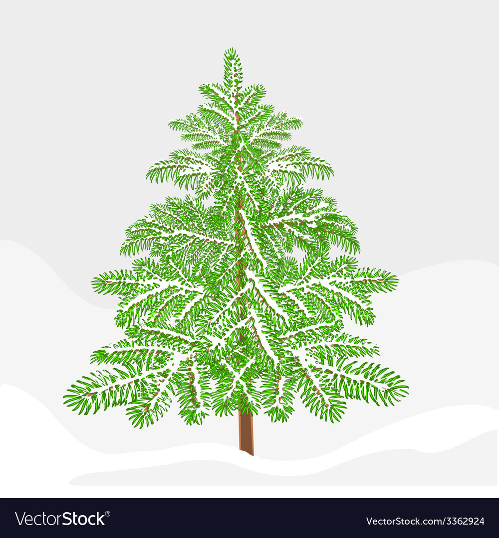 Fir winter snowy landscape christmas decoration vector | Price: 1 Credit (USD $1)