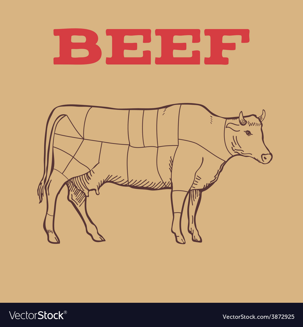 Scheme of beef cuts vector | Price: 1 Credit (USD $1)