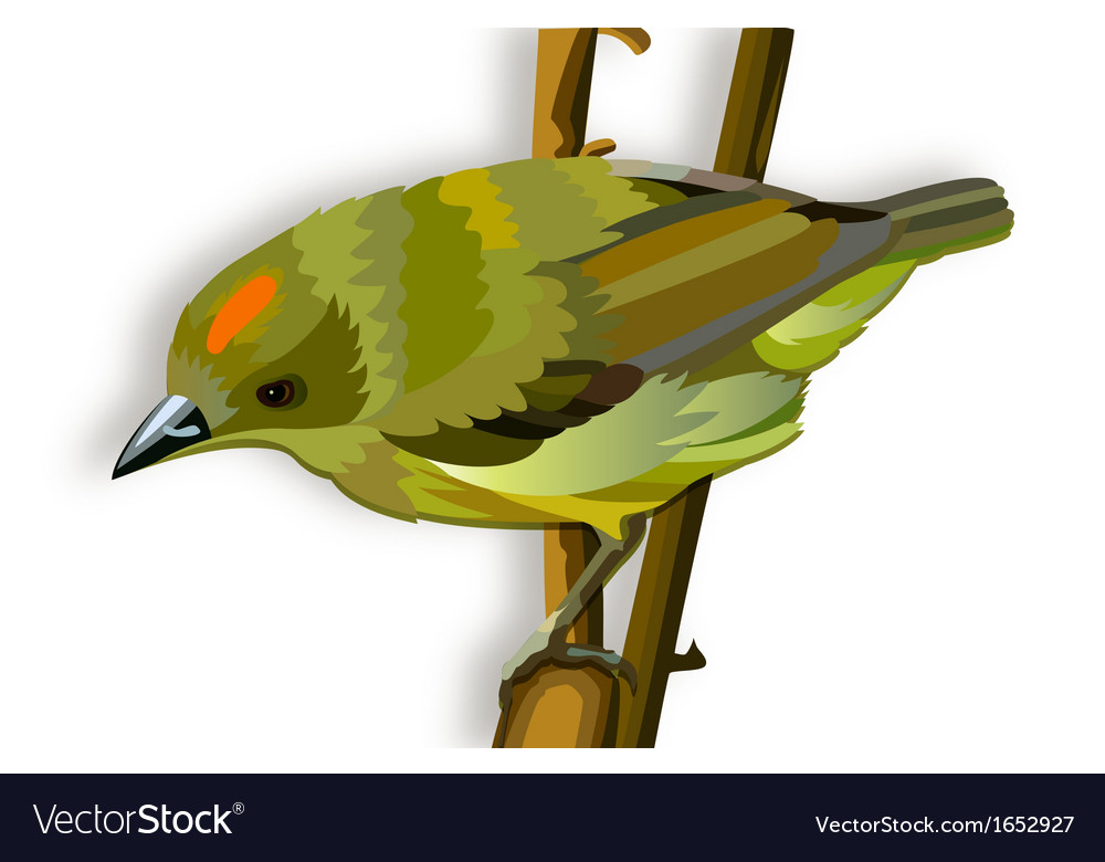 Green bird with orange stripe vector   Price: 1 Credit (USD $1)