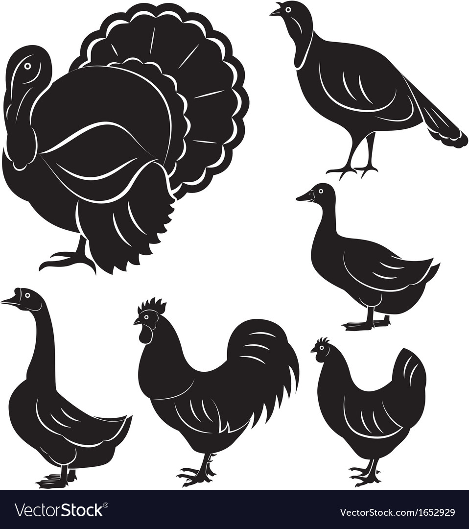 Farm birds vector | Price: 1 Credit (USD $1)