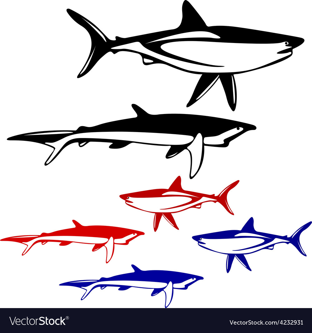 Set shark black and white outline vector | Price: 1 Credit (USD $1)