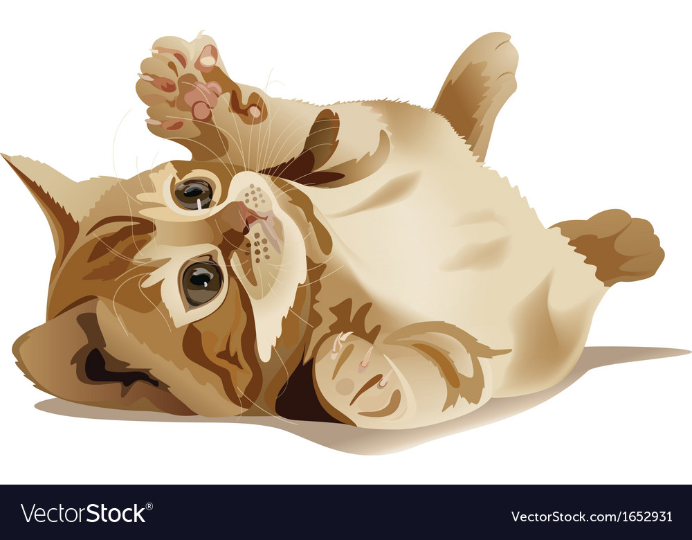 Yellow kitten vector | Price: 1 Credit (USD $1)