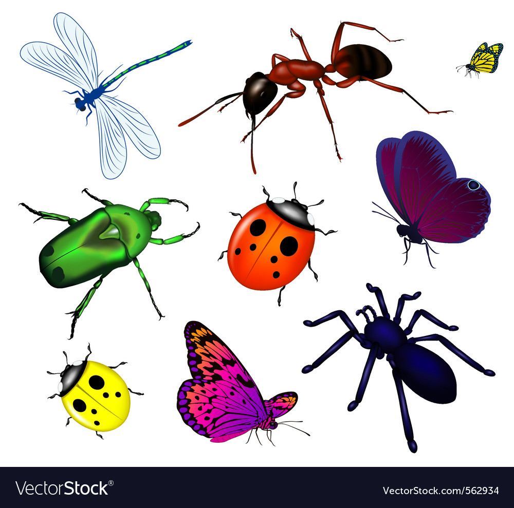 Bugs and insects vector | Price: 1 Credit (USD $1)