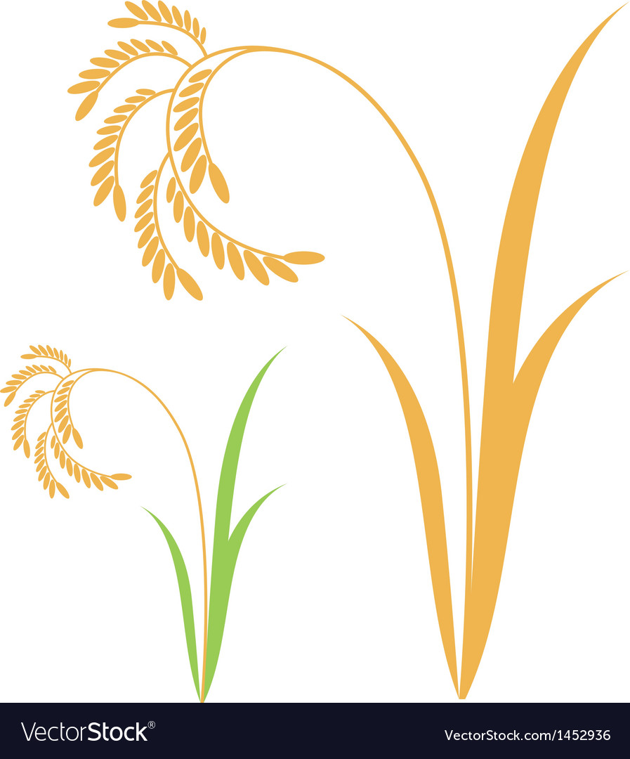 Rice vector | Price: 1 Credit (USD $1)