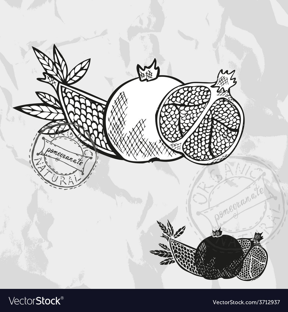 Hand drawn decorative pomegranate fruits vector | Price: 1 Credit (USD $1)