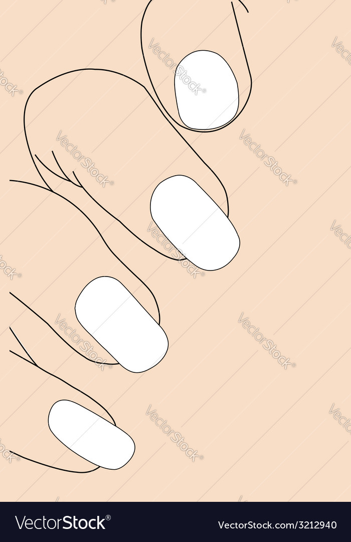 Female fingers with french manicure vector | Price: 1 Credit (USD $1)