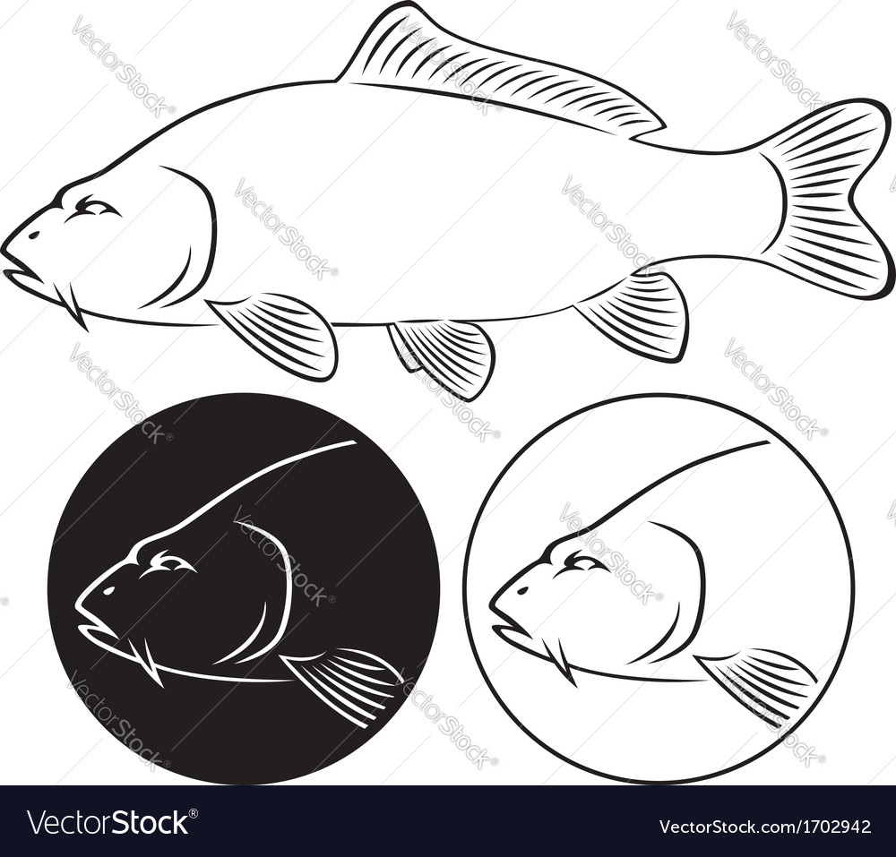 Fish carp vector | Price: 1 Credit (USD $1)
