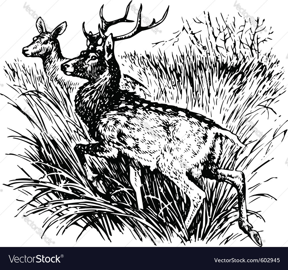 Deer cervus nippon vector | Price: 1 Credit (USD $1)