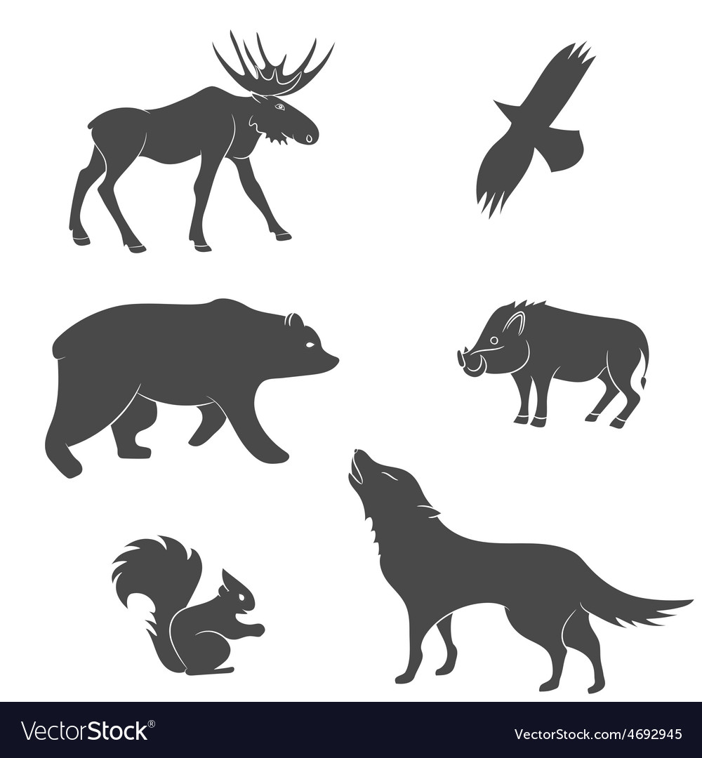 Set of forest animals vector | Price: 1 Credit (USD $1)