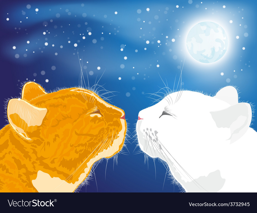 Two beloved cats on the night sky background vector | Price: 1 Credit (USD $1)