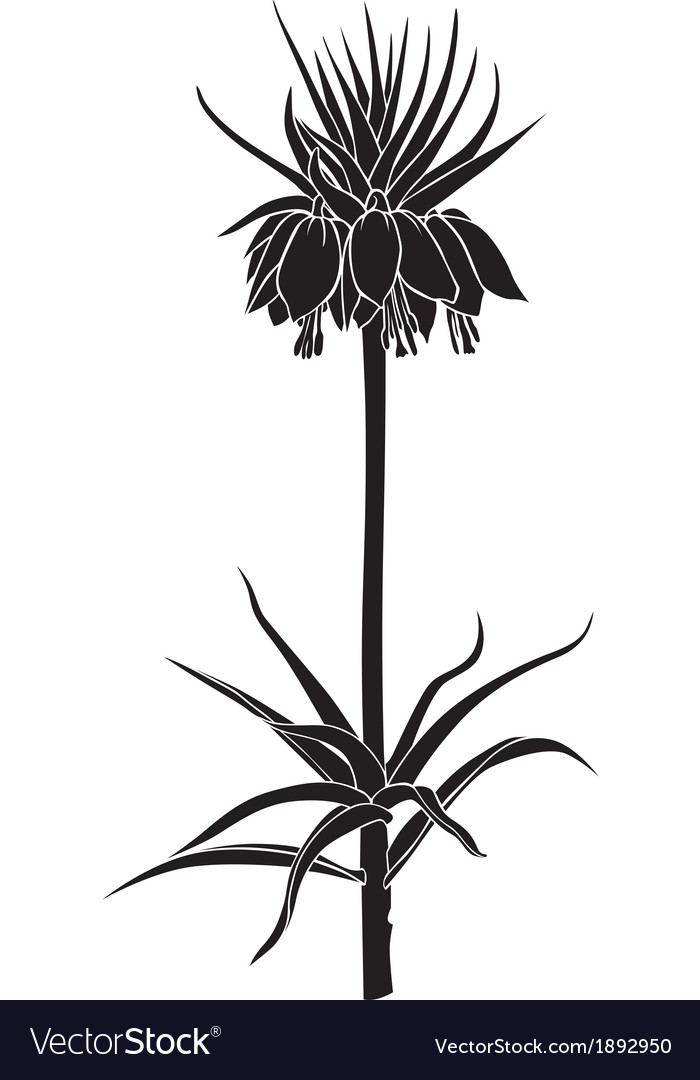 Imperial fritillaria vector | Price: 1 Credit (USD $1)