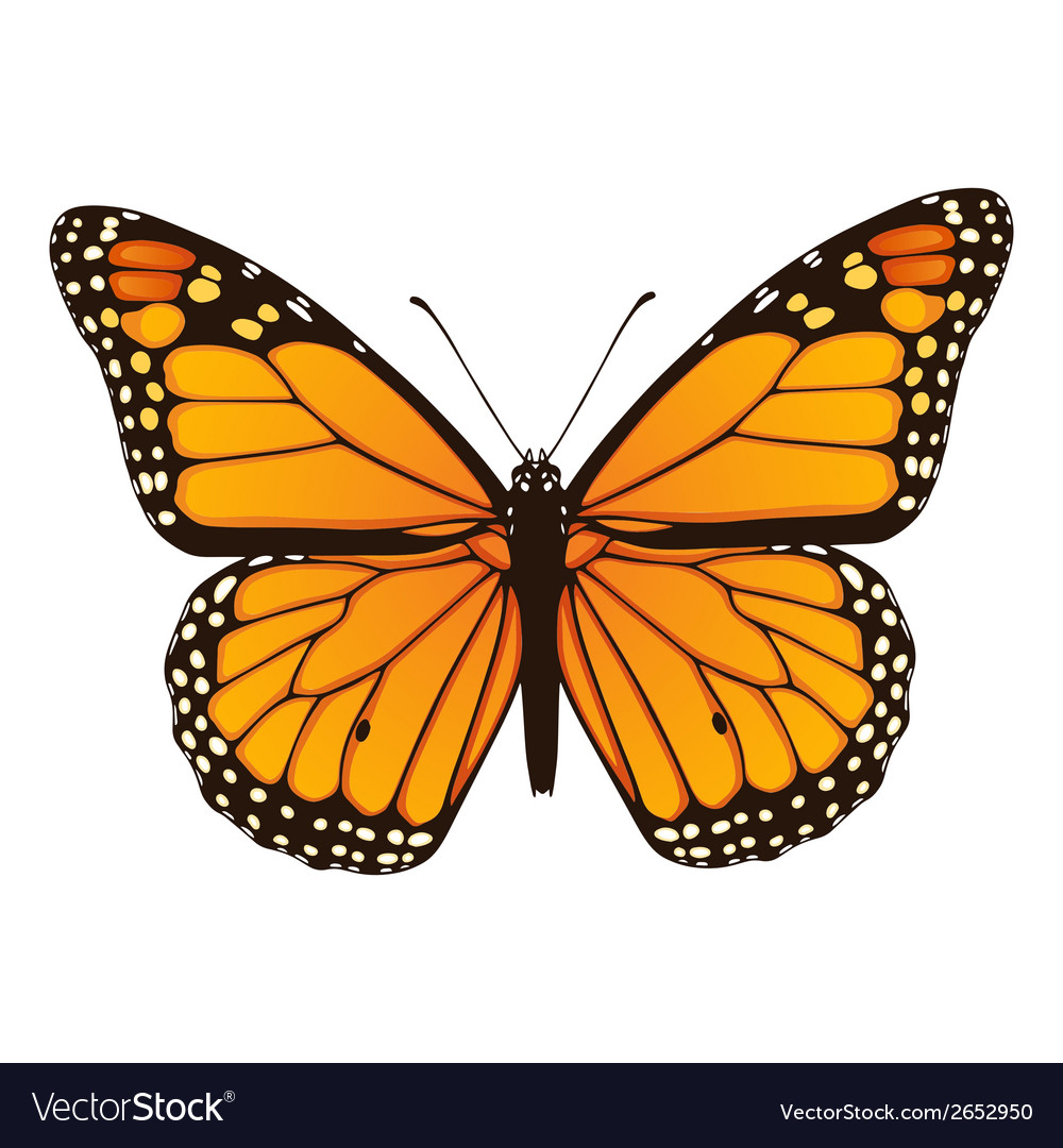 Monarch butterfly hand drawn vector | Price: 1 Credit (USD $1)