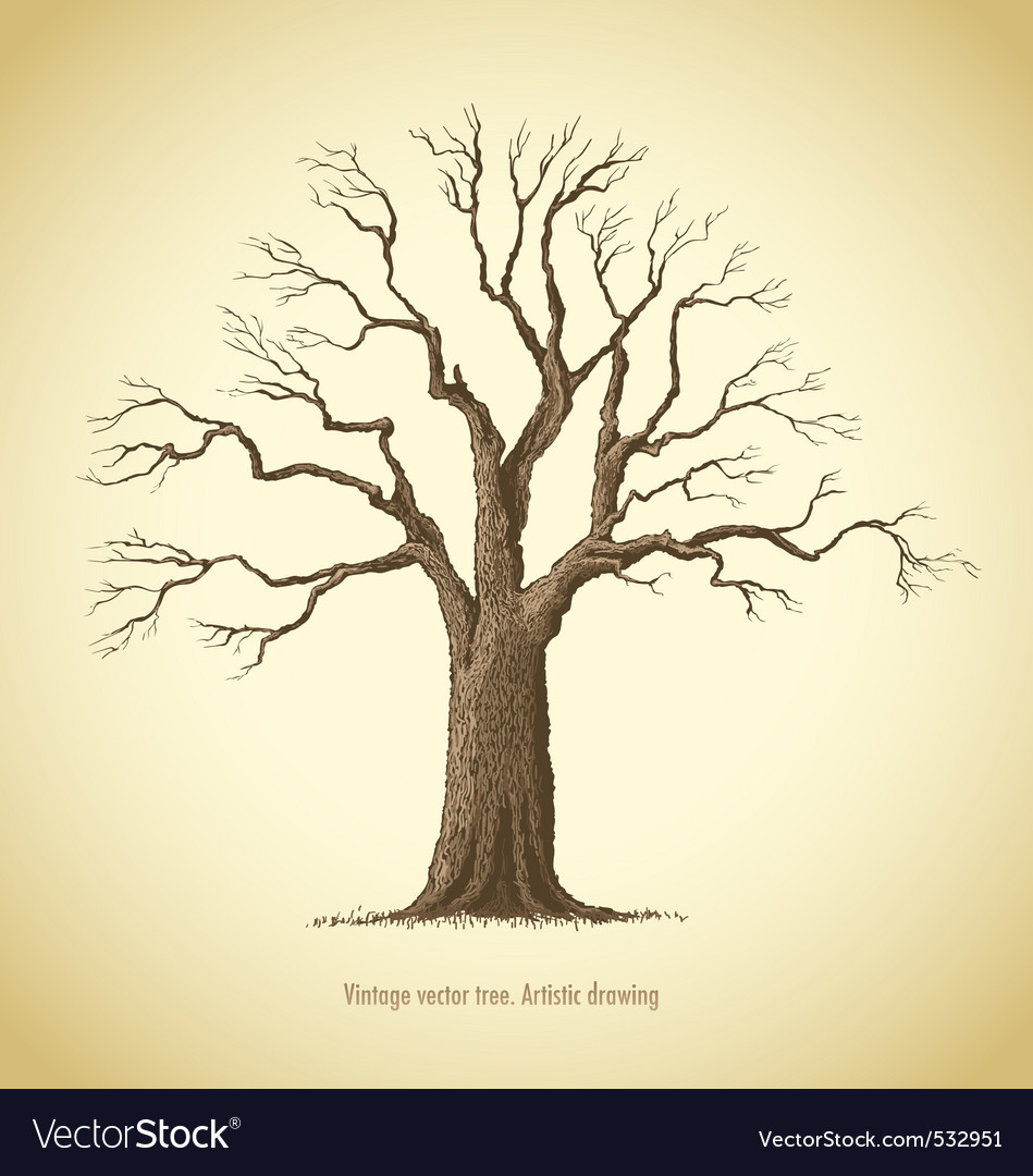 Vintage tree vector | Price: 1 Credit (USD $1)