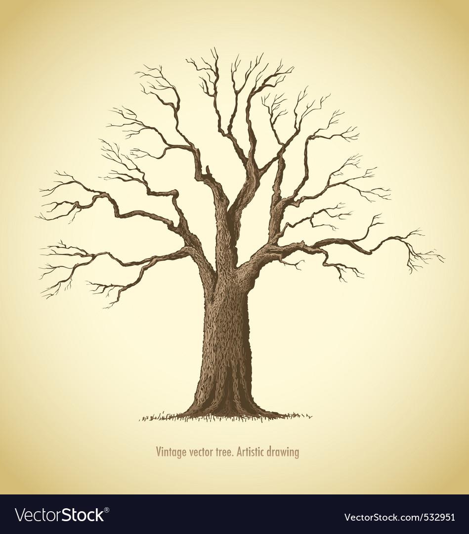 Vintage tree vector | Price: 1 Credit (USD $1)