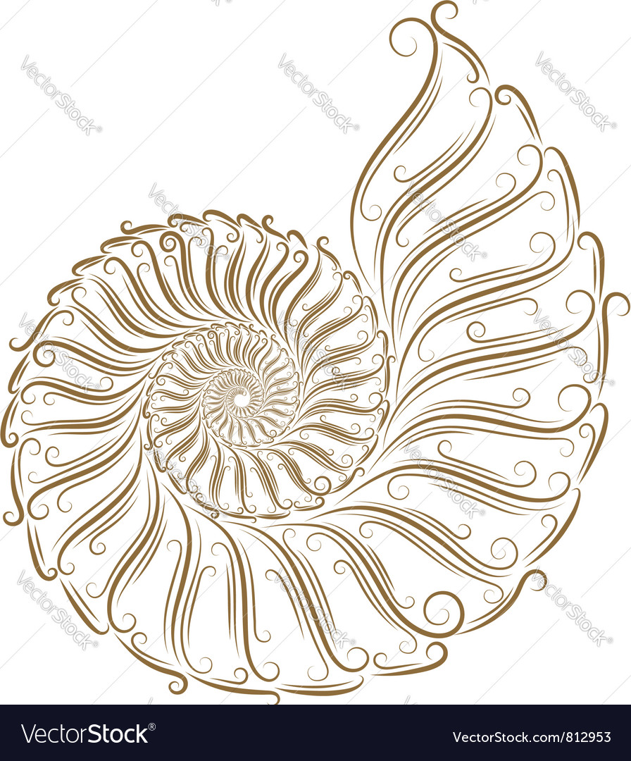 Sketch of seashells vector | Price: 1 Credit (USD $1)