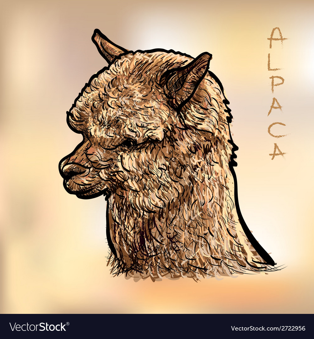 Alapca vector | Price: 1 Credit (USD $1)
