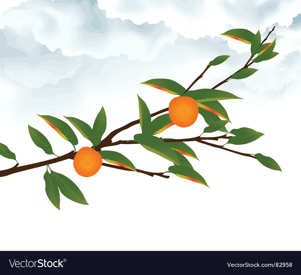 Clouds and fruit vector | Price: 1 Credit (USD $1)