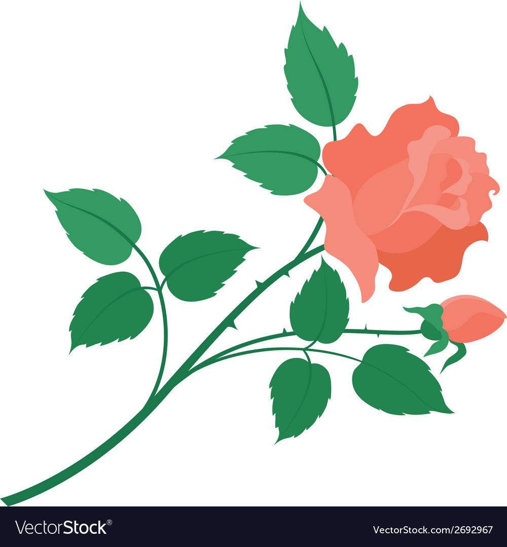 Rose flower isolated vector | Price: 1 Credit (USD $1)