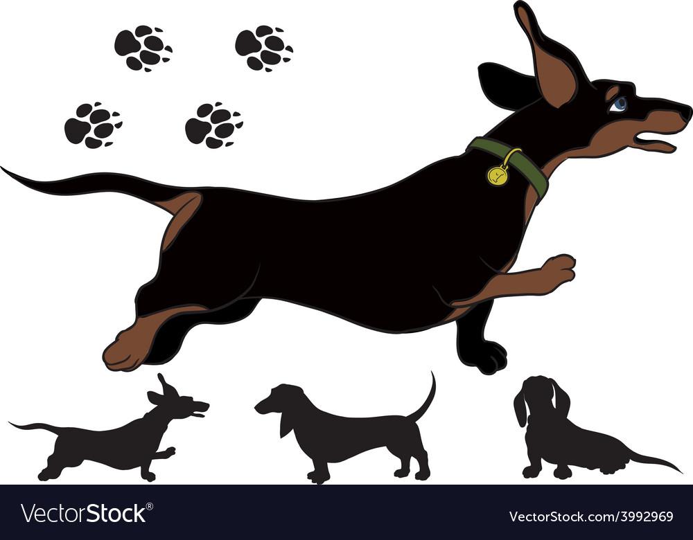 Run dachshund vector | Price: 1 Credit (USD $1)