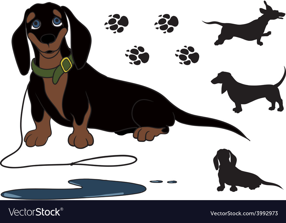 Sitting dachshund vector | Price: 1 Credit (USD $1)