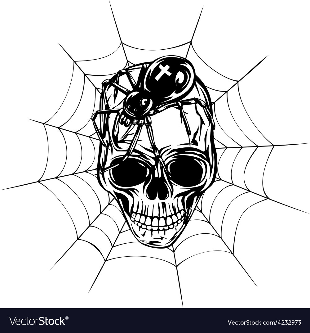 Skull spider and web vector | Price: 3 Credit (USD $3)