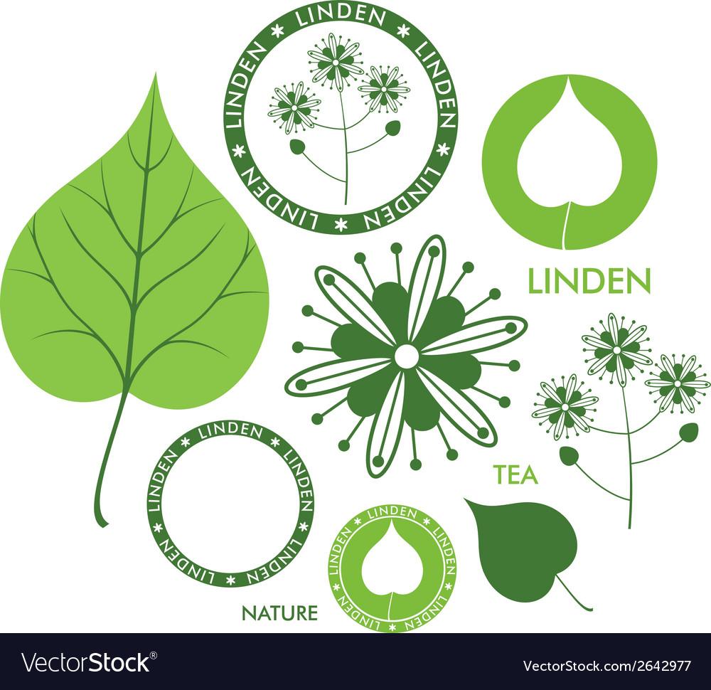 Linden vector