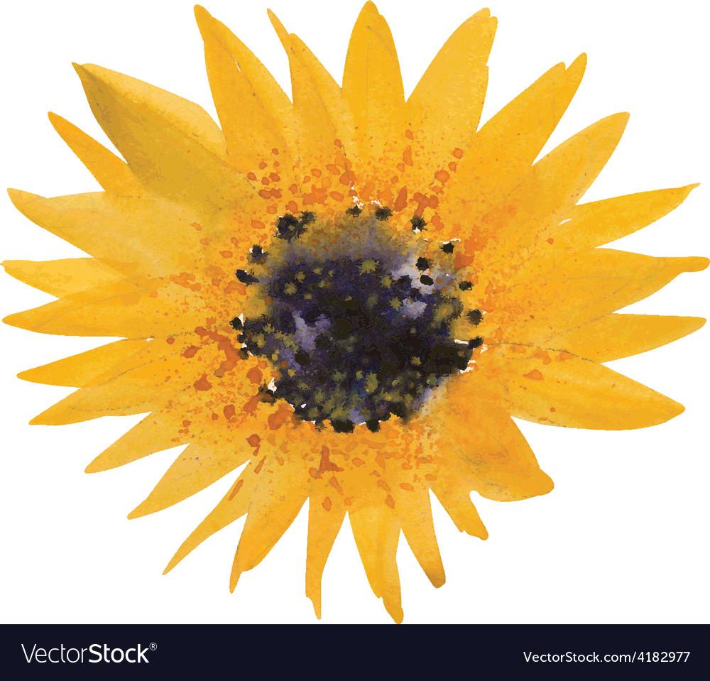 Yellow sunflower vector   Price: 1 Credit (USD $1)