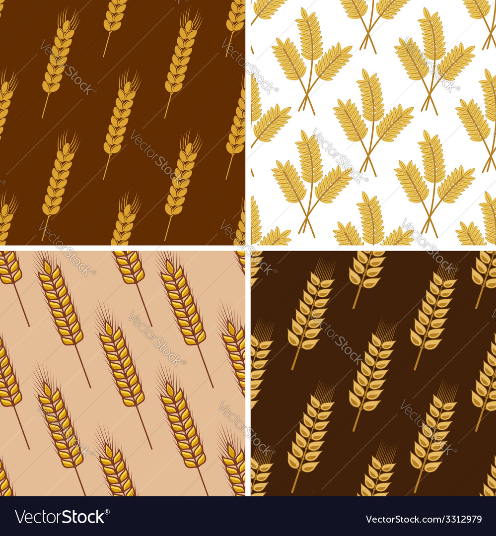 Seamless patterns of wheat and cereal ears vector | Price: 1 Credit (USD $1)