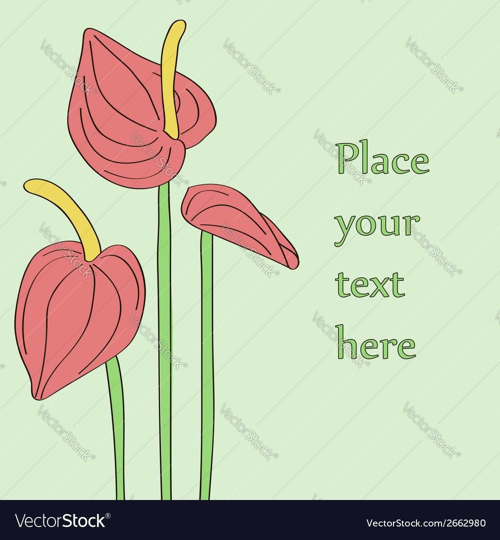 Three red anthurium flowers vector   Price: 1 Credit (USD $1)