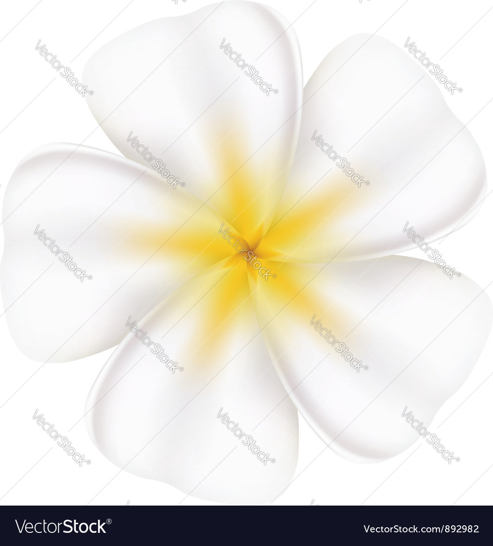Beautiful frangipani vector | Price: 1 Credit (USD $1)